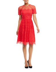 Maggy London Lace Fit And Flare Dress Rose Trellis
