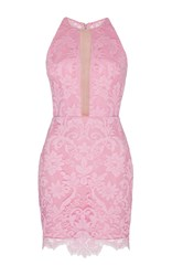 Alex Perry Rush Lace Fitted Halter Mini Pink